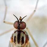 Stechendes Insekt © Harry Hautumm / Pixelio.de