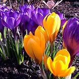 Schönes Reisewetter und erste Frühlingsboten im März - © Claudia Hautumm / Pixelio.de