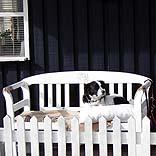 Hundefreundliches Ferienhaus - © pandi / Pixelio.de