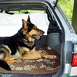 Schäferhund im Auto - © Windrose / Pixelio.de