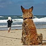 Hundestrand - © magicpen / Pixelio.de