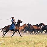 Ungarn - Pferde auf der Puszta - © klickomi / Pixelio.de