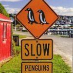 Pinguinwarnschild im Süden Neuseelands - © Rainer Gräser / pixelio.de